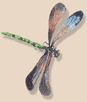 Adragonfly