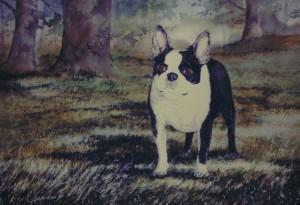 pet-portrait2