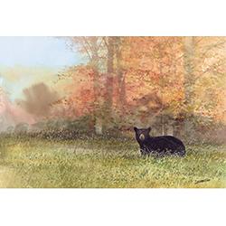 Autumn Wanderer
